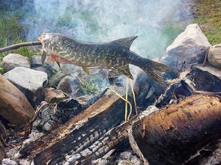 Tillaga nyfångad fisk över elden