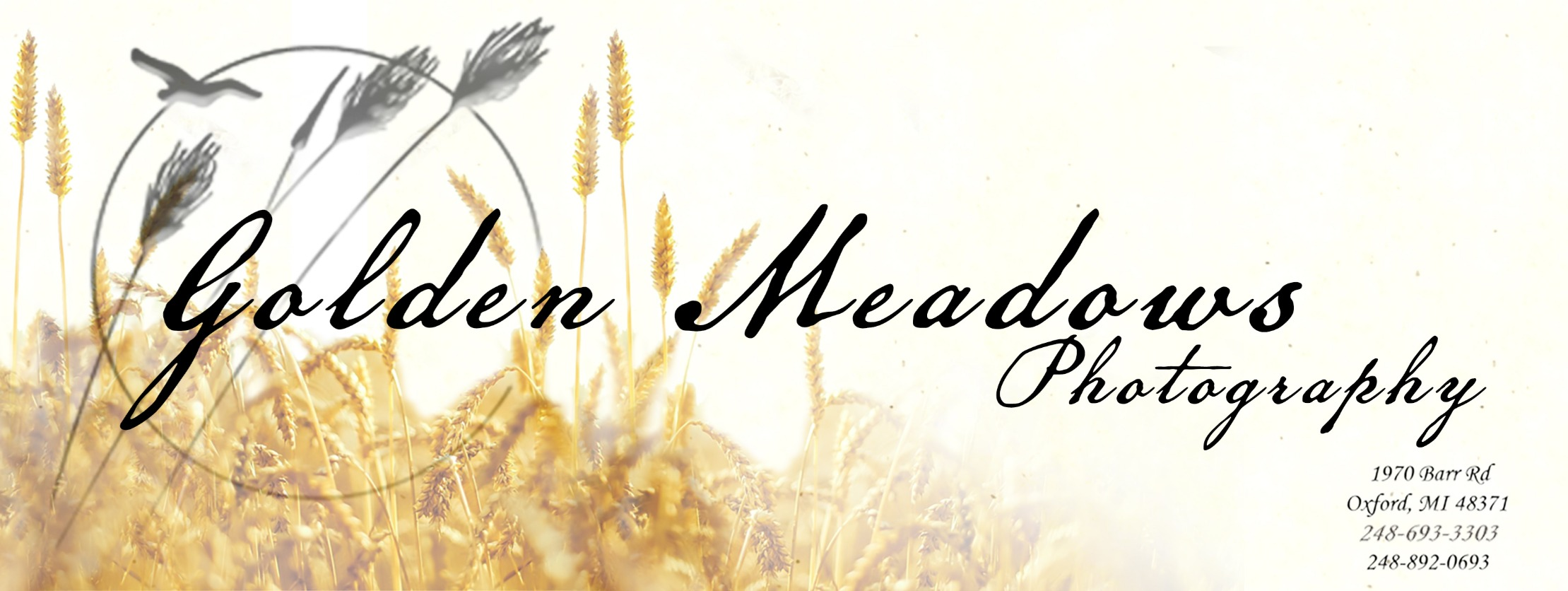 Golden Meadows - Film Production