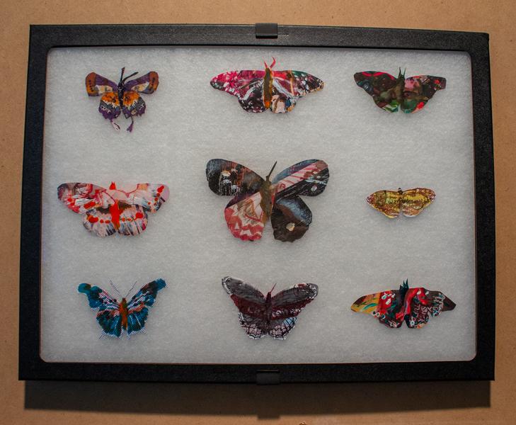 Leftover Butterflies-2584.png