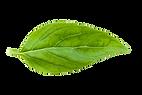 Basilique Logo Final.png