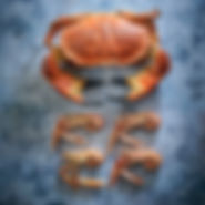 24Crab and Crayfish 1 Square.jpg