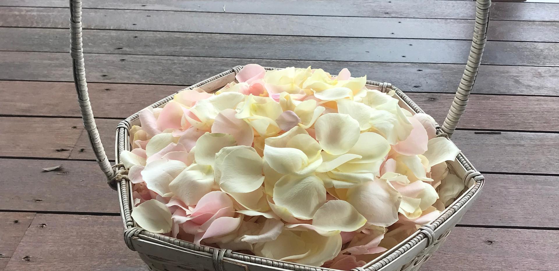 Rose petal aisle sunshine coast