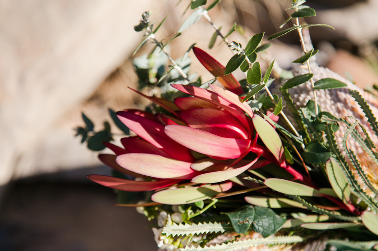 native flowers sunshine coast wedding de