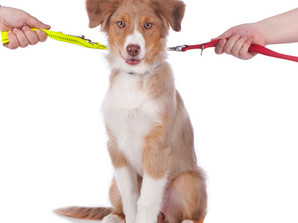 Who gets Fido? - 5 Divorce Things You May Not Know Were Things
