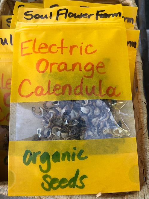 Electric Orange Calendula Organic Seed