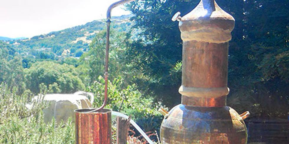 7-5 Hydrosol & Essential Oil Distillation