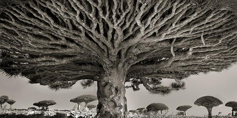 6-9 Tree Medicine