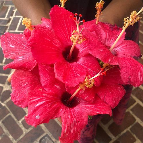 Hibiscus Flower Essence