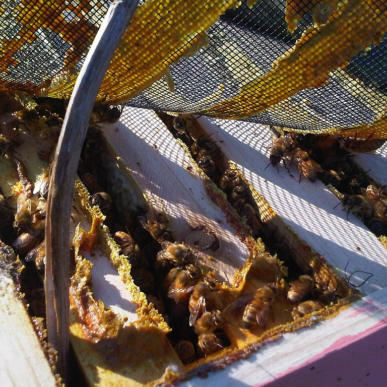 6-14 Intro To Natural Beekeeping
