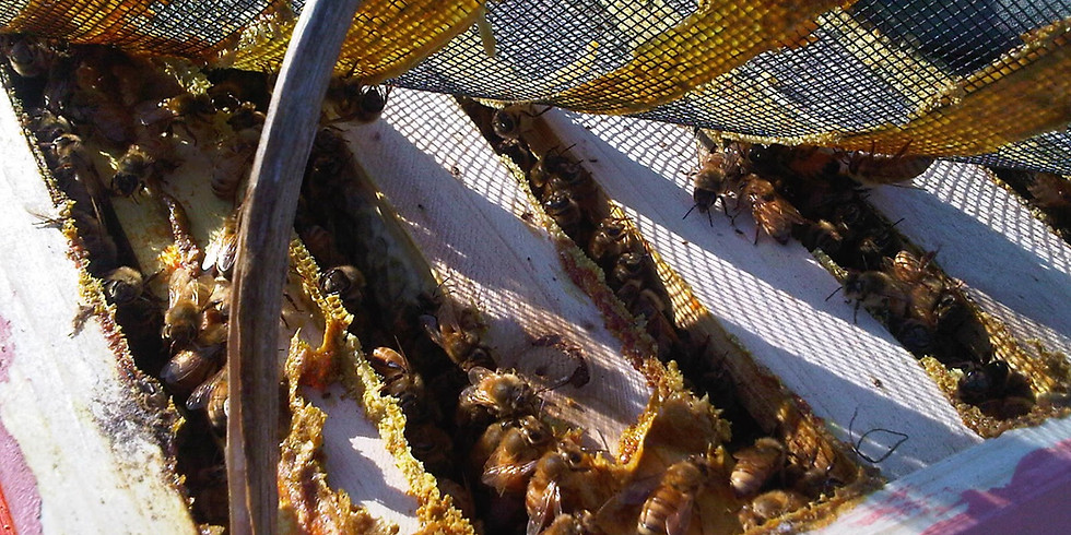 3-22 Intro To Natural Beekeeping