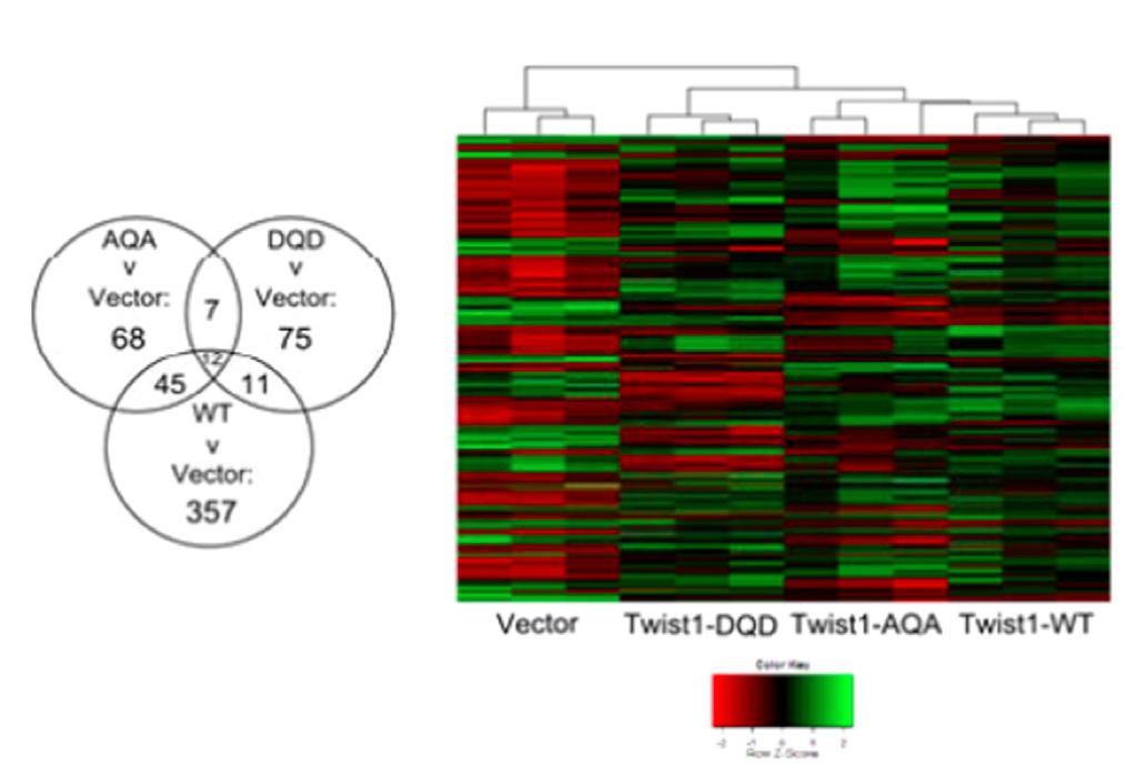 TWIST1 Mutant Transcriptome