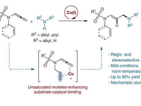 Copper-Catalysed Hydroamination of N-Allenylsulfonamides: The Key Role of Ancillary Coordinating Gro