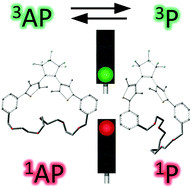 Unraveling ultrafast dynamics of the photoswitchable bridged dithienylethenes under structural const