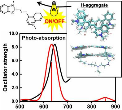 Photophysical Properties of Fluorescent Imaging Biological Probes of Nucleic Acids: SAC-CI and TD-DF