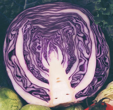 Cabbage, red, raw