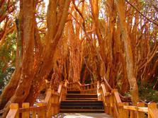 Parque-Nacional-los-Arrayanes-2.jpg