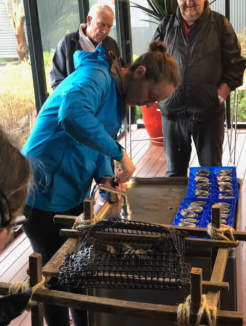 NZ Culinary Cruise - Oyster farm