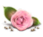 Pink_Rose_Decor_Transparent_PNG_Clipart.