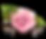 Pink_Rose_Decor_Transparent_PNG_Clipart.