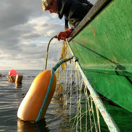 Sustaining America's Fisheries for the Future Act