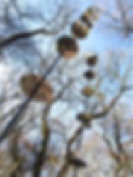 mirror trees 35 w.jpg