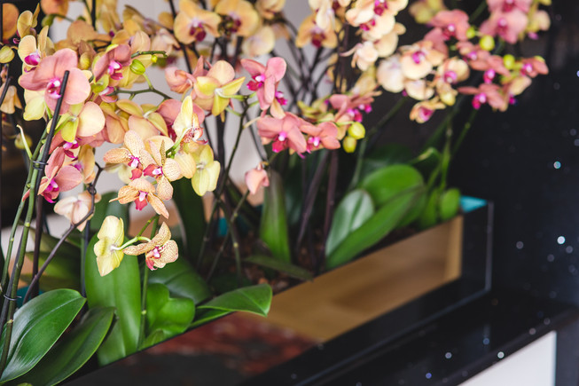 WHEN ORCHIDS DO MORE THAN JUST DELIGHT YOUR EYES..