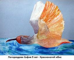 Погораздова София 9 лет - Красноногий иб