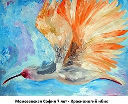 Моисеевская София 7 лет - Красноногий иб