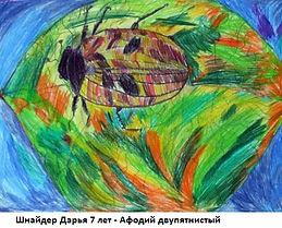 Шнайдер Дарья 7 лет - Афодий двупятнисты