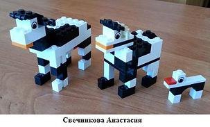 Свечникова Анастасия.jpg