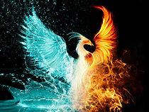 PhoenixBird-1.jpg