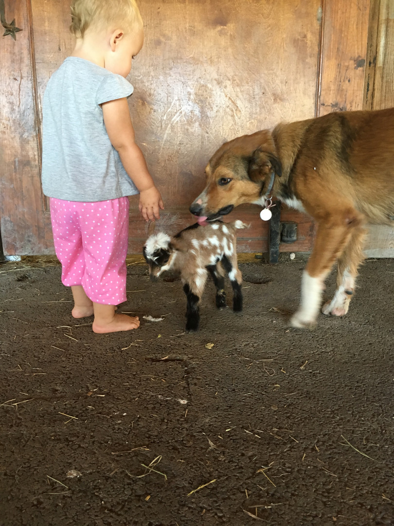 gibson_baby goat IMG_0348.JPG