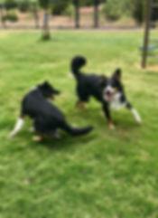 Trueman- gibson puppy.jpg