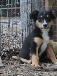 puppy fall 2018- brown-female .jpg