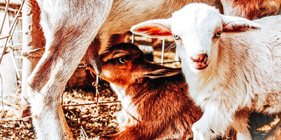 Farm Day! Fri March 19th 5:30-6:30