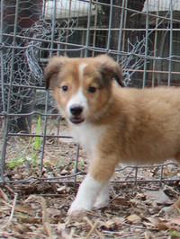 puppy fall 2018-tan male.jpg