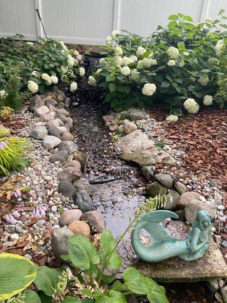 Cindy's Pond.jpg