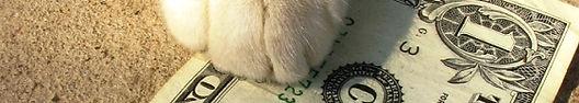 cat-paw-dollar-shutterstock_14413522.jpg