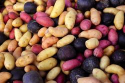 Exotic Potatoes