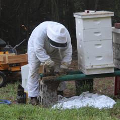 Capturing Swarm in Bee Yard