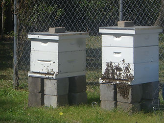 First Two Hives.JPG