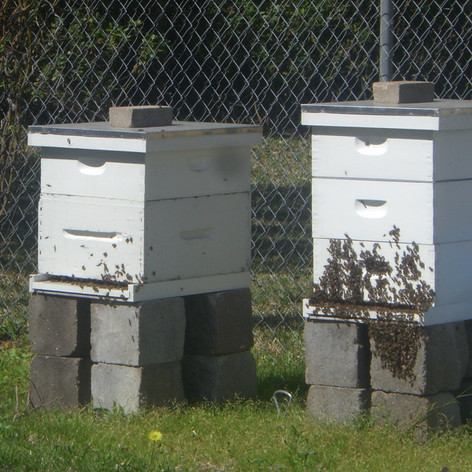 First Two Hives