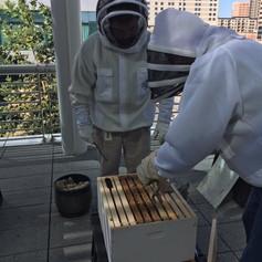 George R Brown Hives