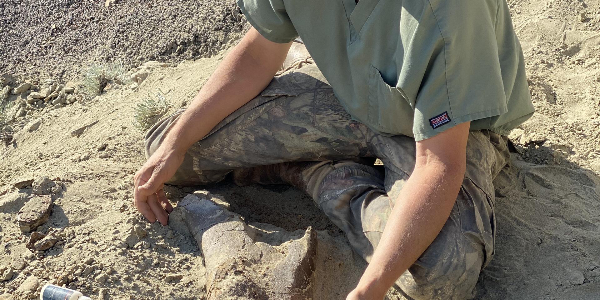 Triceratops femur