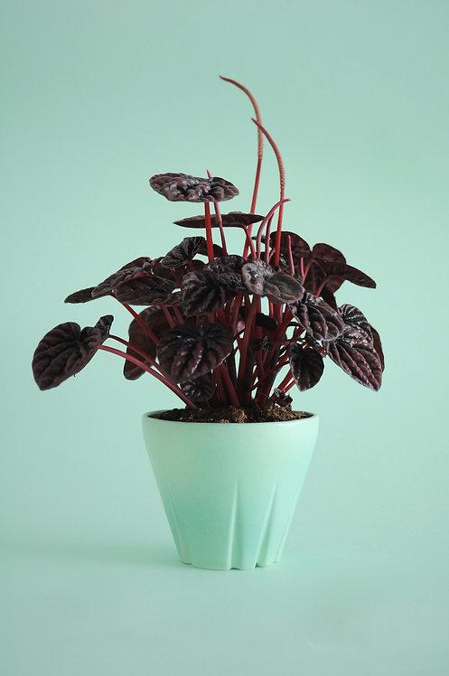 mint decor, mint planter, mint wedding favours, mint wedding decorations, small ceramic plant pot, planter, Yahalomis