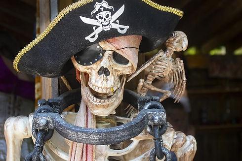 pirate-pets-myth-or-reality-1050x700.jpg