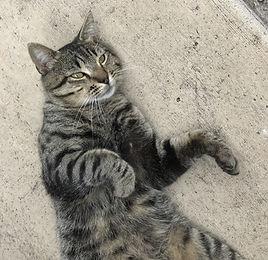 Gossman_Found Kitty 2