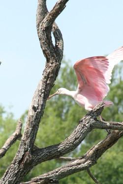 Beautiful Birds to be seen.