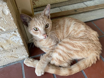 Found - Kitten.jpg