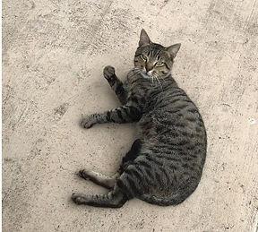 Gossman_Found Kitty 1